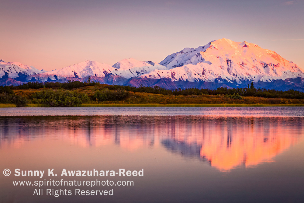 Close up of Mt. Denali (McKinley) with rose color glow, reflects on Reflection Pond at sunset, Denali National Park & Preserve, Interior Alaska, Autumn.