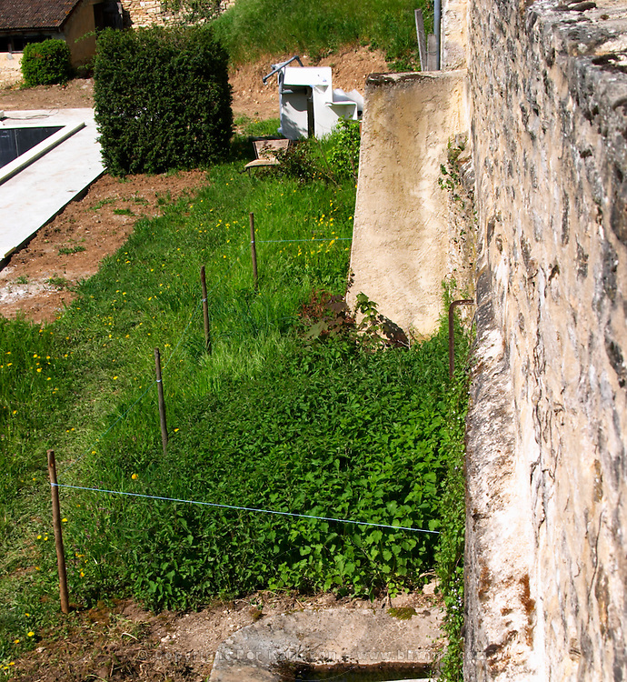 Nettles grown to be used for bio-dynamic mixes at Chateau de Monthelie, Bourgogne