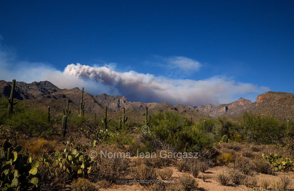 Smoke from the Bighorn Fire, burning in the Santa Catalina Mountains, looms over Sabino Canyon, Sonoran Desert, Coronado National Forest, Tucson, Arizona, USA.