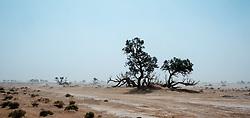 Dust storm in the Moroccan Sahara Desert<br /> <br /> (c) Andrew Wilson | Edinburgh Elite media