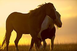 Horses at Bojden<br /> © Hippo Foto - Jon Stroud