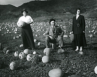 1918 Casaba field at Sunset Blvd. & Harper St.