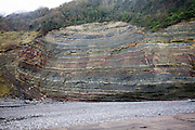 Lower lias rocks folded in an anticline structure, Watchet, Somerset, England