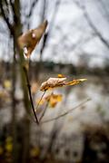 """London. United Kingdom, """"Autumn Leaves"""". Thames Path 'Surrey Side"""" Mortlake. Surrey. River Thames, <br /> <br /> Tuesday  05/12/2017<br /> <br /> © Peter SPURRIER"""