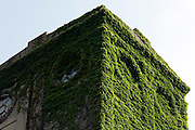 detail of ruin building with tower overgrown with green vines