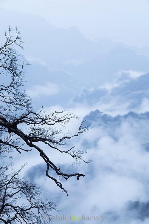 Bare branch of tree and mountains in fog seen from the Tianmen Mountain Glass Walkway, Zhangjiajie, Hunan Province, China