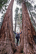 Our first look at these massive sequoia trees....amazing!