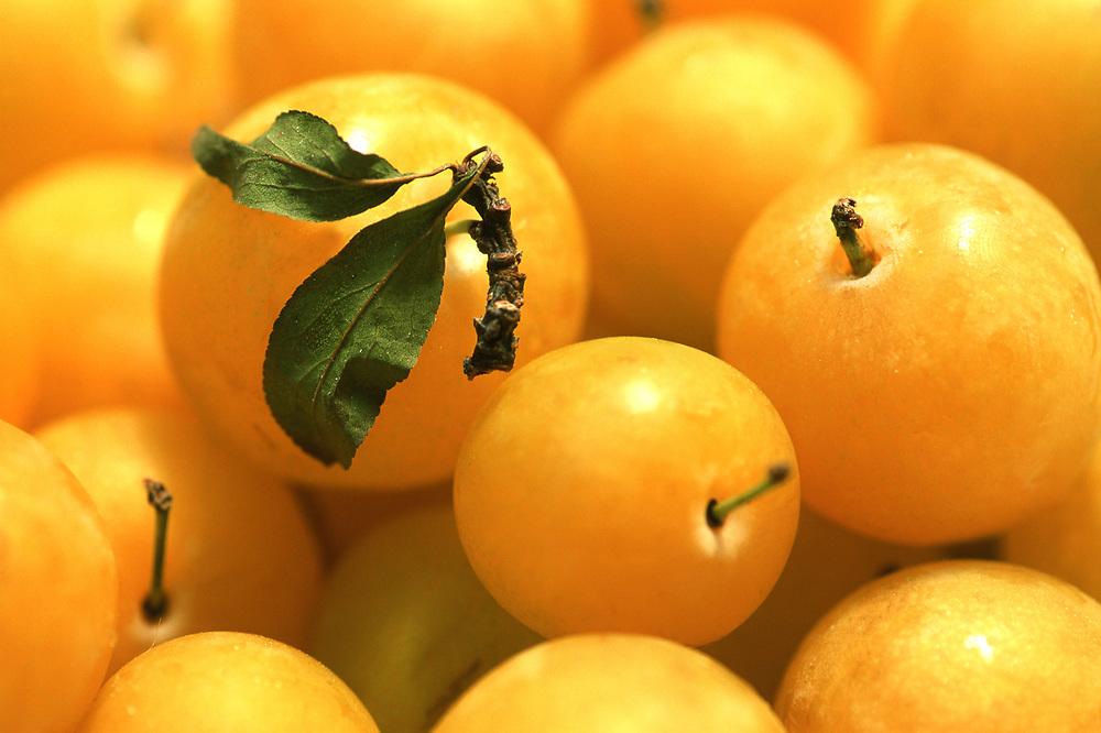 Close up selective focus photo of a bunch of Shiro plums