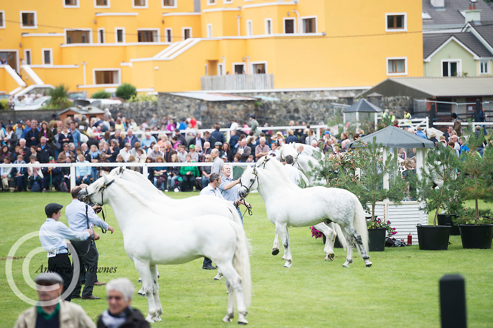 Scene from at the 93rd annual Connemara Pony show in Clifden Co. Galway  Photo:Andrew Downes, XPOSURE <br />   Photo: Andrew Downes, Xposure.