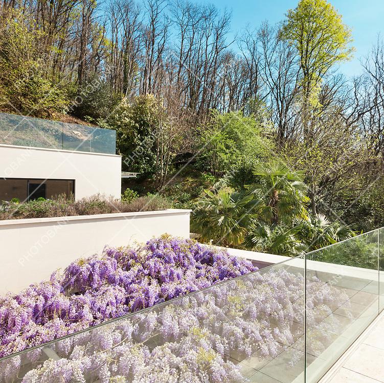 architecture, modern house, veranda with wisteria, top view