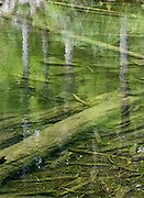 Trees reflect in Mason Lake, on Ira Spring Memorial Trail #1038, in Alpine Lakes Wilderness Area (Mount Baker Snoqualmie National Forest), near Interstate 90, Washington, USA.