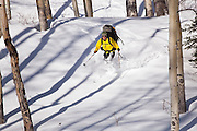 Backcountry skier Judd MacRae catches turns through an open aspen grove in Uncompahgre National Forest, Colorado.