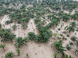 African palm plantation affected by floods from hurricanes Eta and Iota.