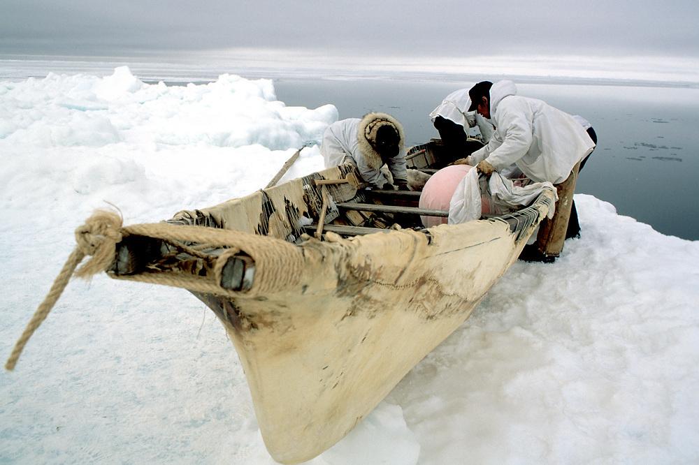 Barrow, Alaska, native whalers prepare their umiak for the hunt on the edge of the icepack
