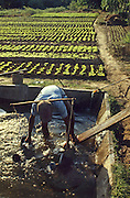 Watering garden beds with hand sprinklers from water pit in Vientiane, Laos