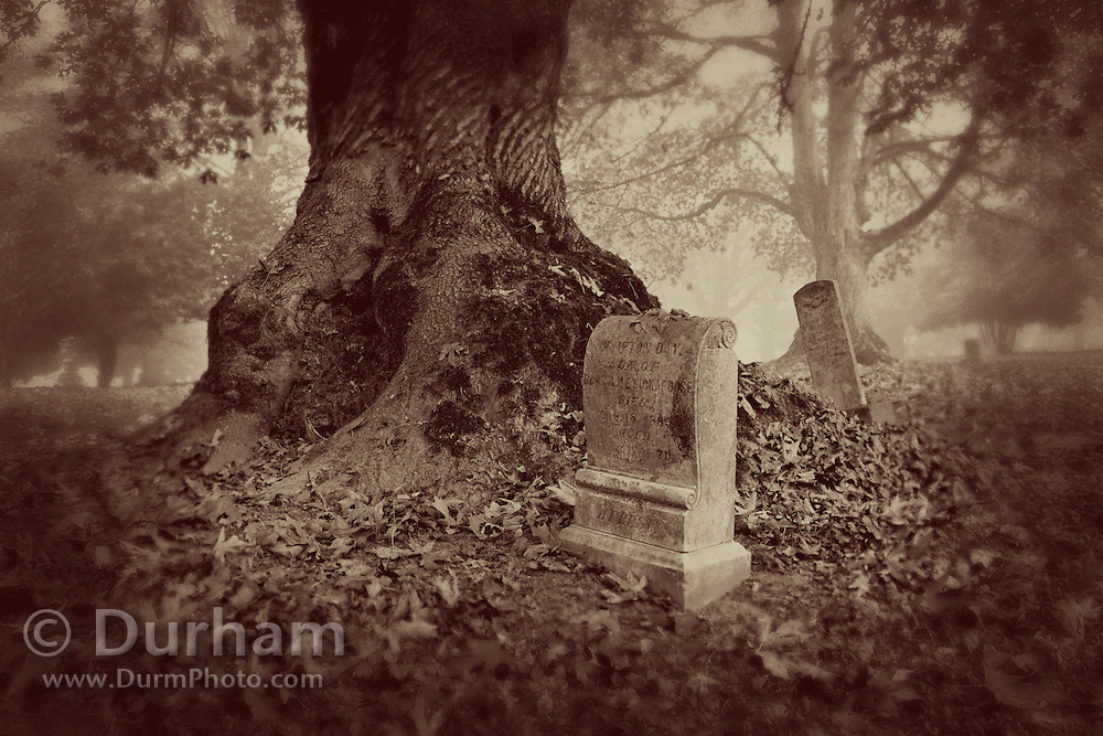 An old abandoned cemetery with a large oak tree. Greenwood Hiils was established in 1882 and eventually abandoned, but has been run and maintained by a community volunteer organization.