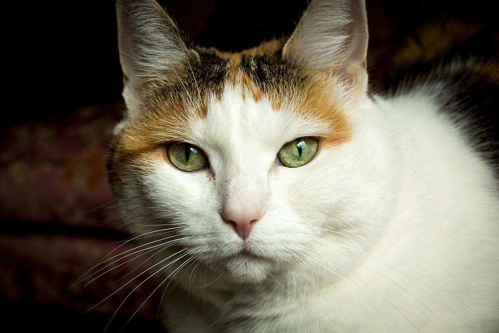 Sweet Alice, calico cat residing at Washington Place, Mount Vernon, Baltimore. Photo taken May 11, 2019