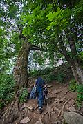 A hiker walks on the trail that leads to Kheerganga in the Parvati valley in Kullu, Himachal Pradesh, India