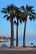 Couple under palm trees along Promenade des Anglais in NIce on the French riviera