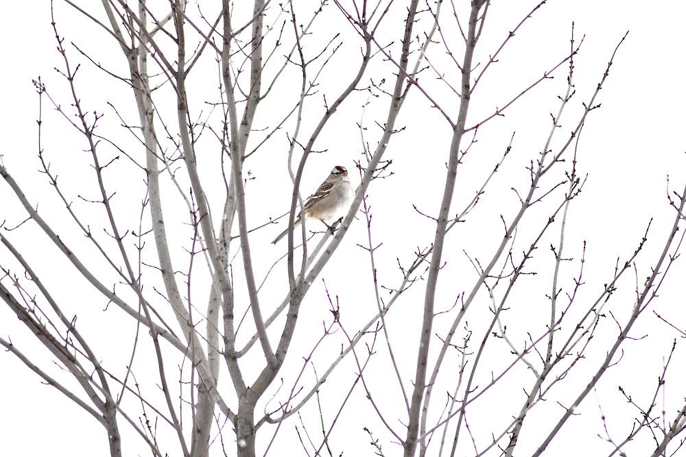 Ohio birds