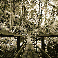Oregon Coast Trail. Oswald West State Park, OR.<br /> <br /> 12x12 inch square prints(8x8 inch photo) printed on Kodak Endura paper (lustre only)