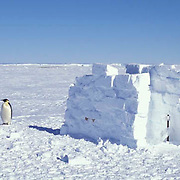 Antarctica, Temporary rest room at base camp. Atka Bay near Emperor Penguin rookery.