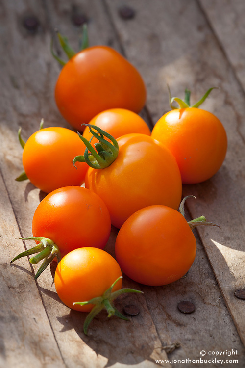 Tomato 'Jaune Flamme'. Heirloom tomato