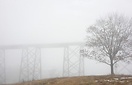 Salisbury Mills, New York - A tree in the fog by the Moodna Viaduct railroad trestle on a warm winter day on Jan. 2, 2010.