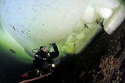 ice diving, ice diver, scuba diver under ice, Russia, White Sea, MR