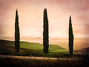 Three Cypress trees under a pastel sunrise in Tuscany Italy.