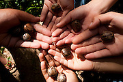 Divinopolis_MG, Brasil. ..Detalhe de maos com sementes no Parque do Gafanhoto...Detail of hands with seed in the Gafanhoto park...Foto: LEO DRUMOND / NITRO