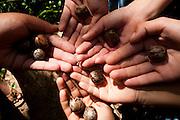 Divinopolis_MG, Brasil. ..Detalhe de maos com sementes no Parque do Gafanhoto...Detail of hands with seed in the Gafanhoto park...Foto: LEO DRUMOND / NITRO