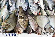 09 MARCH 2006 - HO CHI MINH CITY, VIETNAM: Fish for sale in the Central Market in Ho Chi Minh City (formerly Saigon) Vietnam. Photo by Jack Kurtz / ZUMA Press