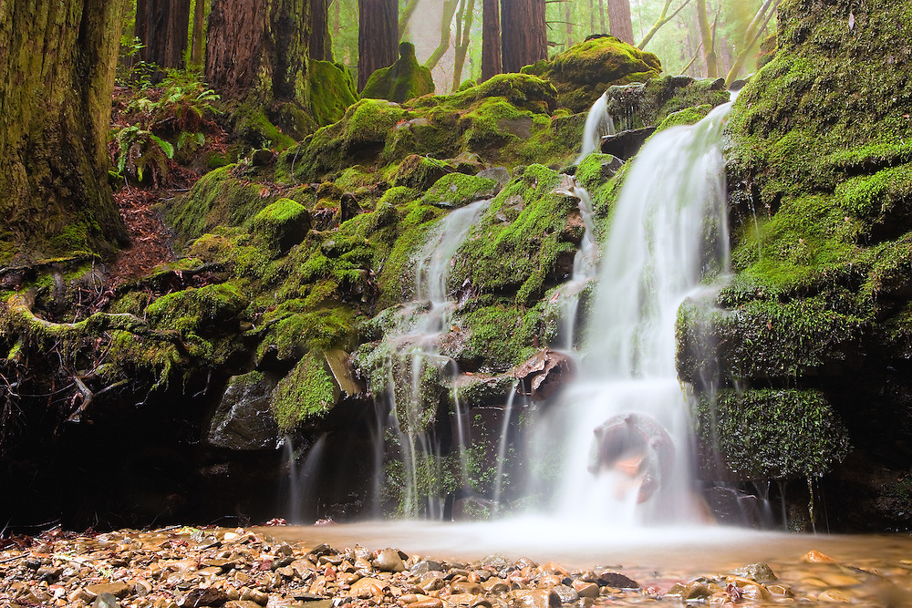Baltimore Canyon in Larkspur California is a magically lush forest in the winter months. This is Dawn falls, a smaller waterfall,  12 feet or so.