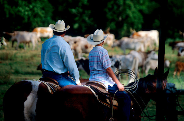 a man and young boy on horses ready to herd cattle