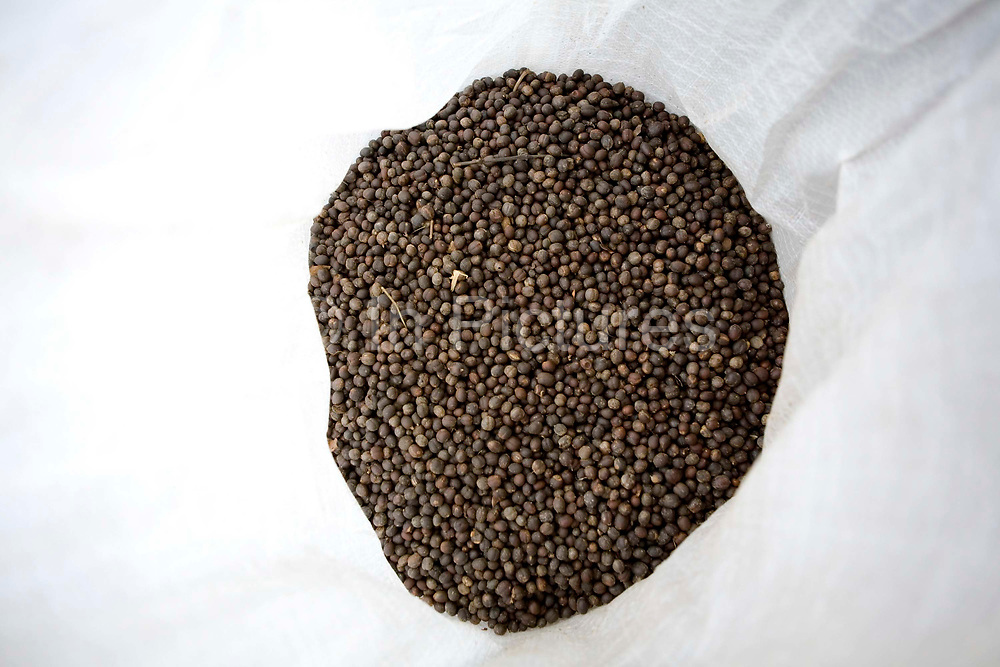 Dried coffee beans at the bottom of a white sack, Uganda.
