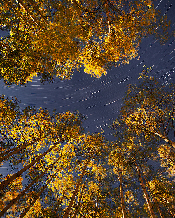 A shot looking straight up at the stars through a moonlit aspen grove. The stars trailed across the sky during the 19-minute exposure.