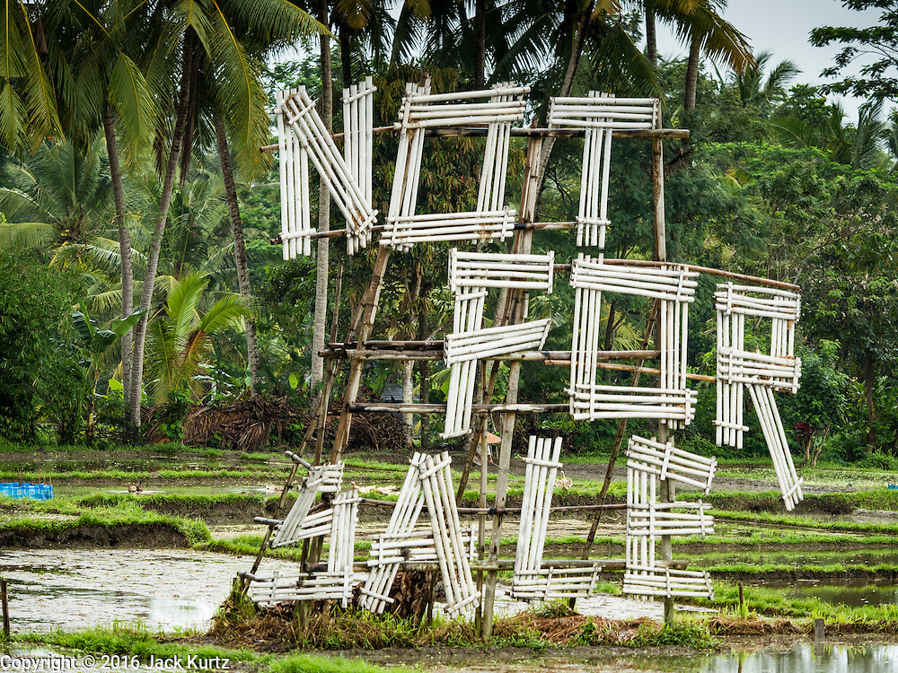 """18 JULY 2016 - UBUD, BALI, INDONESIA:    A large """"Not For Sale"""" sign in a rice field near Ubud. Many rice fields around Ubud have been sold and turned into homes for foreign retirees or expensive hotels for foreign tourists. Rice is an integral part of the Balinese culture. The rituals of the cycle of planting, maintaining, irrigating, and harvesting rice enrich the cultural life of Bali beyond a single staple can ever hope to do. Despite the importance of rice, Bali does not produce enough rice for its own needs and imports rice from nearby Thailand.    PHOTO BY JACK KURTZ"""