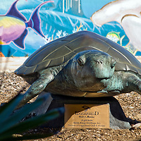 A non-profit education and ocean conservation facility located on the Atlantic Ocean in north Palm Beach County city of Juno Beach. The facility houses a variety of exhibits, live sea turtles and other coastal creatures.