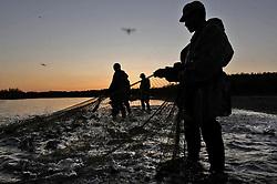 Salmon caviar poachers colect spawning fish along the Vyvenka river near Khailina in Northern Kamchatka July 24, 2007.