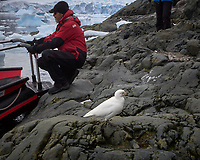 Snowy Sheathbill near the landing at the Argentine Brown Scientific Station in Antarctica. Image taken with a Leica T camera and 18-56 mm lens (ISO 100, 56 mm, f/16, 1/500 sec).