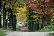 Nederland, Malden, 31-10-2019  Rode, oranje en gele tinten in het bos in de herfst. Een mooie laan met bomen, bomenlaan. Rijk van Nijmegen . Foto: Flip Franssen