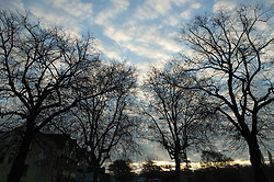Tree lined residential street at dusk,