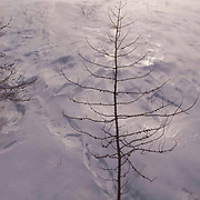 Howling winds created near whiteout conditions in Wapusk National Park, Manitoba, Canada