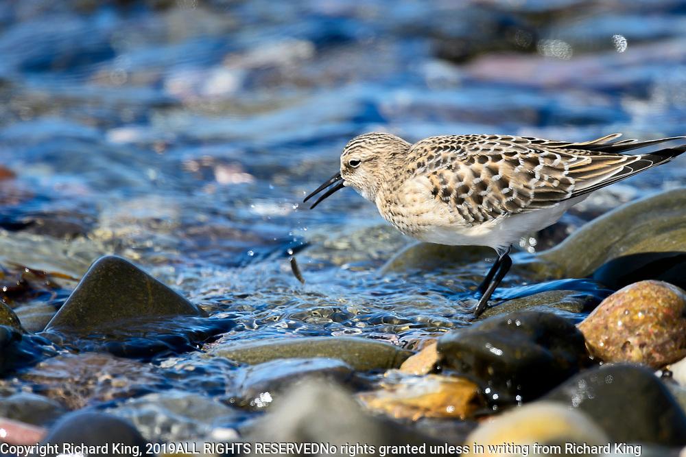 Birding Photographs from Quebec, Canada