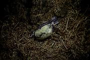 Isolation experiments in lockdown April-June 2020. Bird.