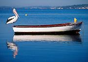 Pelican waiting on Rowboat, Lake Macquarie, Australia