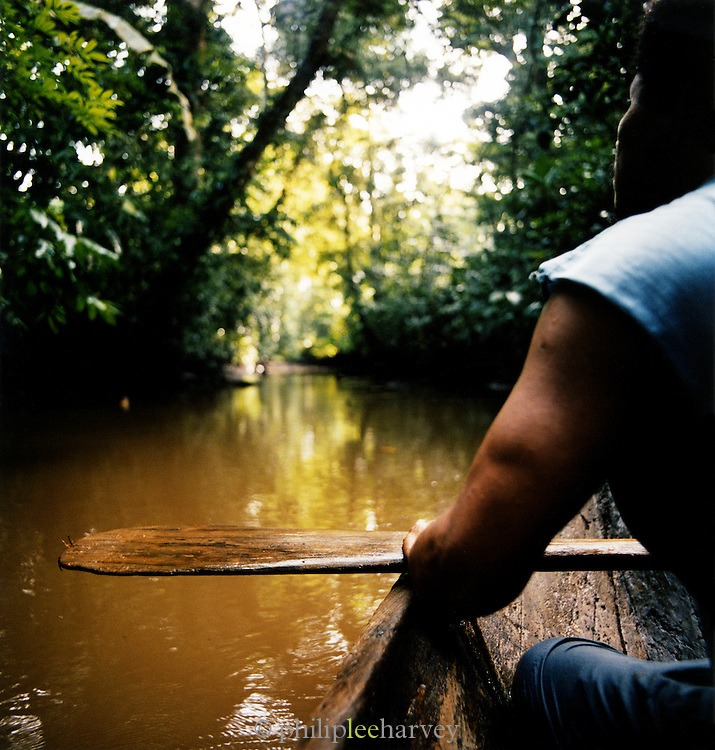 Paddling a canoe through rainforest at the Tortuguero National Park, East Coast, Tortuguera, Limon, Costa Rica