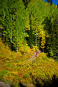 Ryan McDermott running the Cardiff Fork trail in Mill D South in Big Cottonwood Canyon, Utah