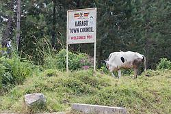 Karago Town Council Sign & Cow